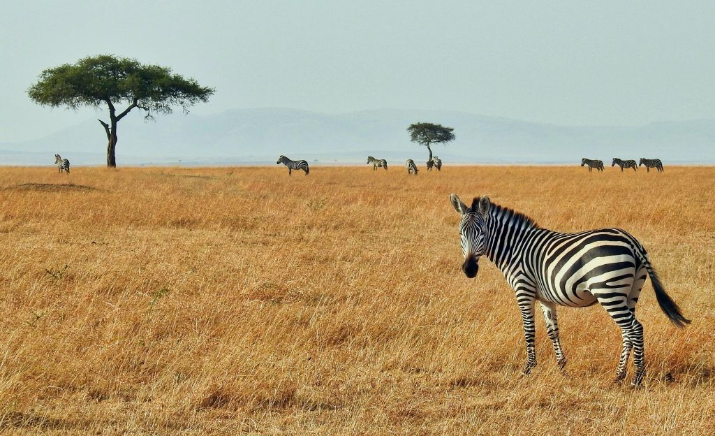 Read more to find out which African countries are open to international travel - Africa