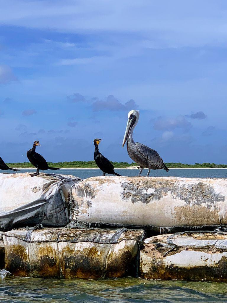birds-rio-lagartos