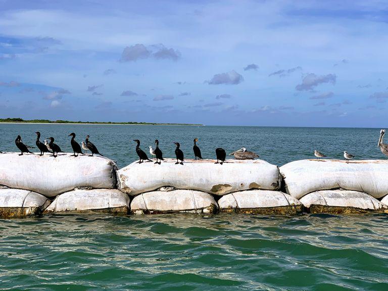 rio-lagartos-birds