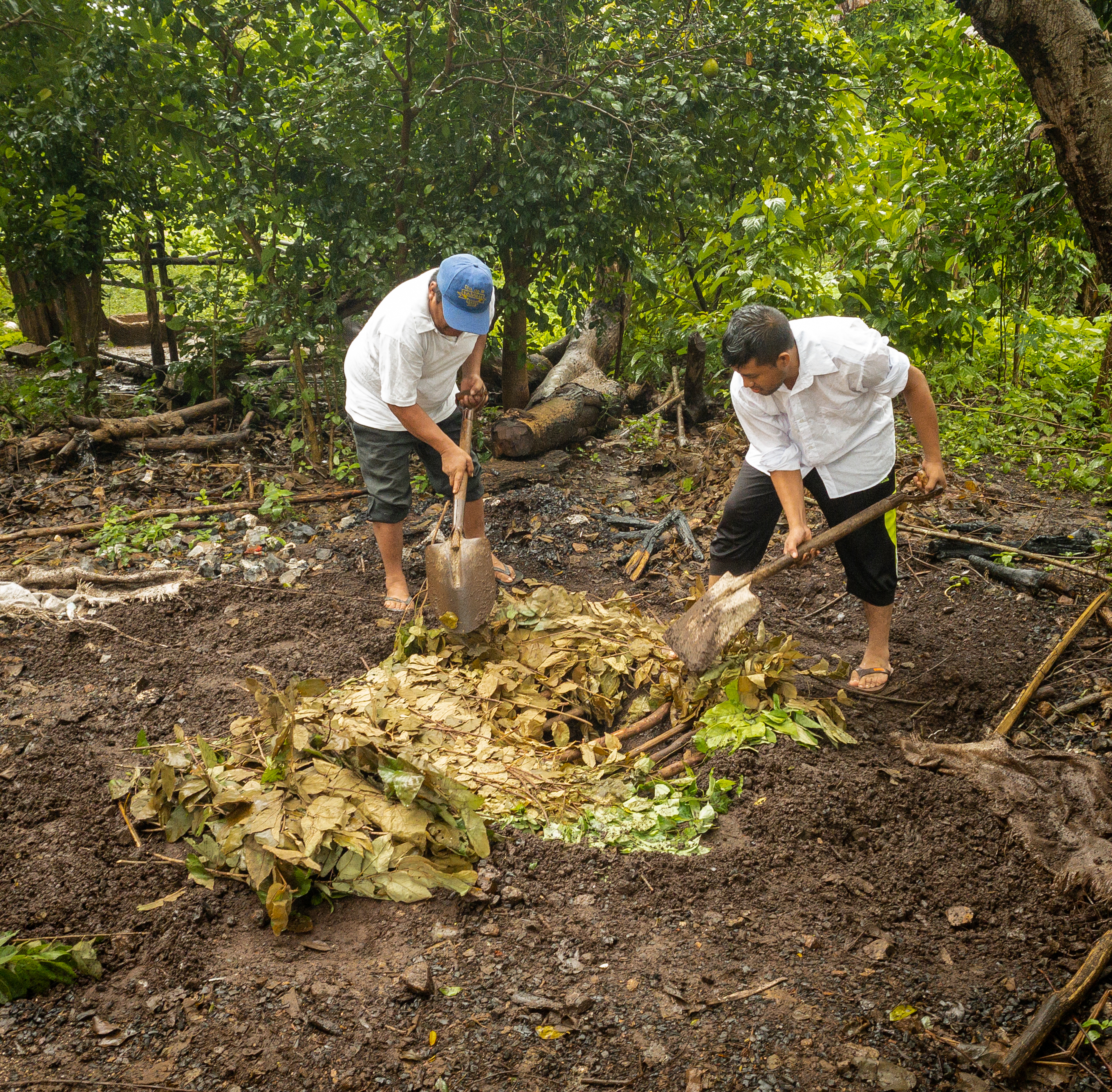 pib is a traditional Mayan underground oven